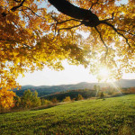 Prepare Your Home For Winter in San Ramon Valley